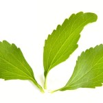 stevia-1024647_640